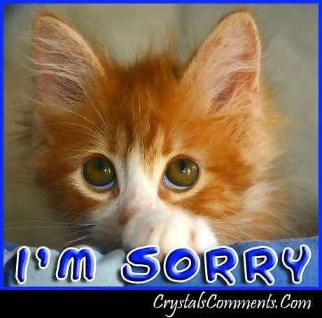 how to say sorry in cat language
