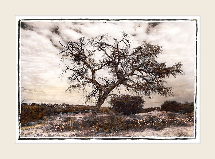 African Landscape - Dried Tree -Marlene Neumann Fine Art Photography www.marleneneumann.com  mailto:neumann@worldonline.co.za ... Perfect for Home/Office Decor & Unique Gifts