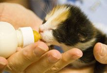 Socialized Cat Guide - Alley Cat Allies *How to Care for Neonatal Kittens