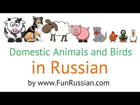 » Russian Video Lesson: Domestic Animals and Birds