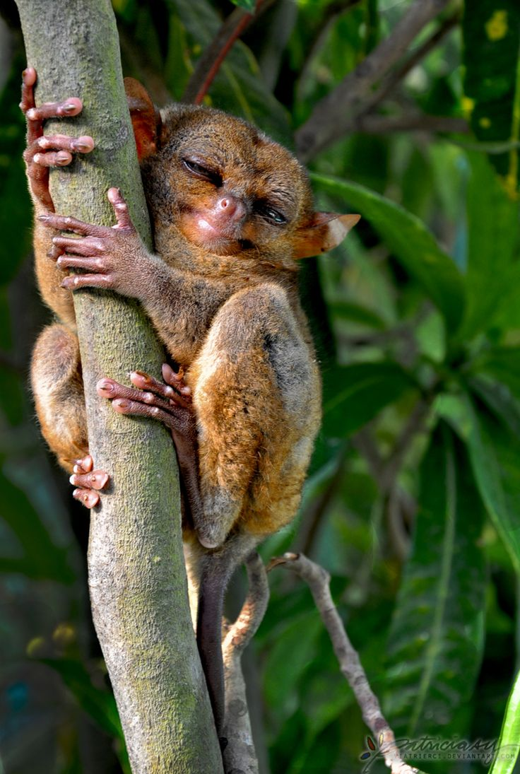 .IAM HAPPY COZ I JUST HAD ME SOME cake: Smile Animal, Funny Pictures, Funny Animal Photo, Cudd Creatures, Animal 33, Beautiful Creatures, 33 Photo, Crazy Funny, Baby Tarsier