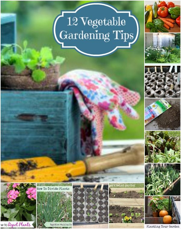 12 vegetable gardening tips gardening gardeningtips http for Gardening 101 vegetables