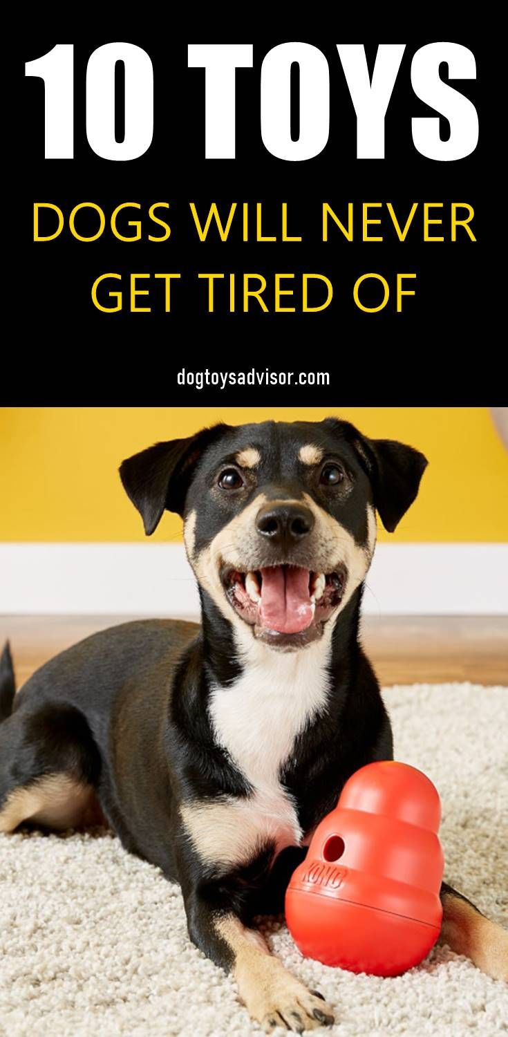 Looking For Some Easy Ways To Keep Your Dog Busy Keeping Your Dog