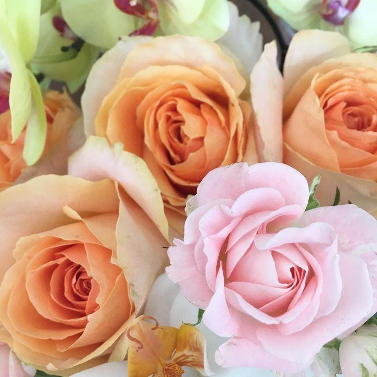 おはようございます��  オレンジ色のバラはオークランド。ピンクのバラはブリトニーちゃんです�� コチョウランと合わせたアレンジを撮影中でーす♬ byピーターパン  #hanajikan #hana #flower #flowers #flowerslovers #flowerstagram #flowerarrangement #花時間 #花時間2017 #花 #花好き #花藝 #花好きな人と繋がりたい #花が好きな人と繋がりたい #花のある生活 #花のある暮らし #フラワーアレンジメント #かわいい #バラ  #rose  花 @斉藤理香 http://gelinshop.com/ipost/1517090376561162969/?code=BUNyajbF3rZ