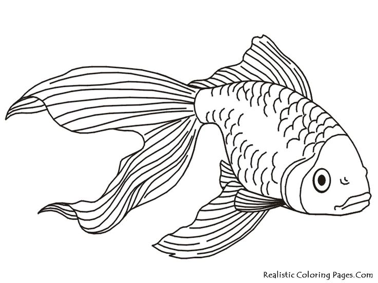 98 best art_animal pics images on pinterest | coloring sheets ... - Tropical Coloring Pages Print