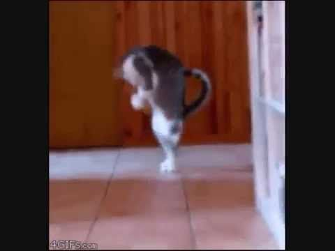 12 Cats Who Forgot How To Cat ◄◄◄