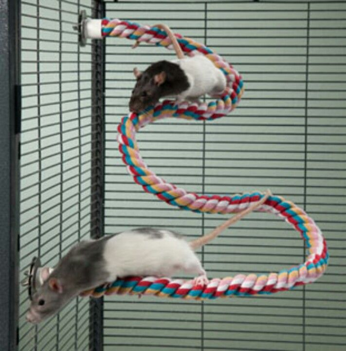 Small animal climbing rope