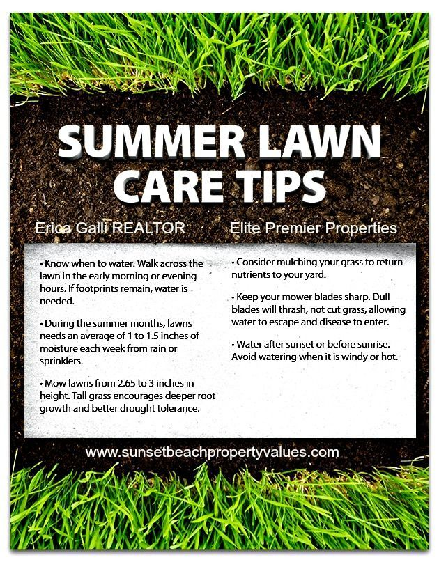 1000 images about lawn care on pinterest lawn care for Weeds garden maintenance