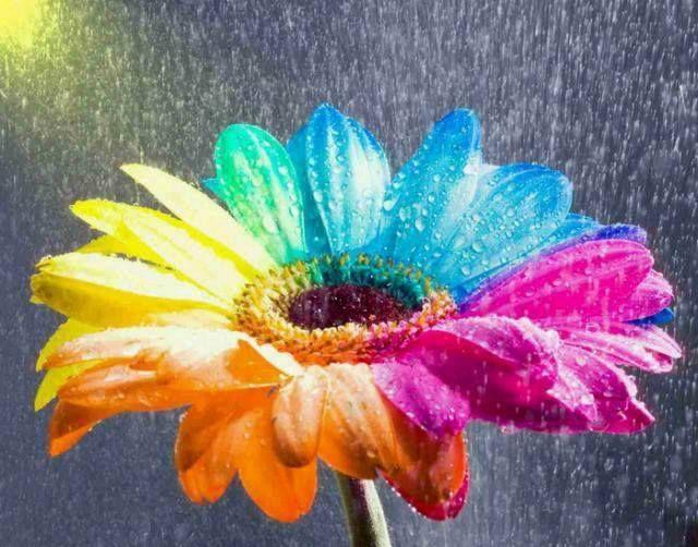 19 Best Color Wheel Images On Pinterest