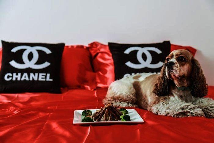 Most Luxurious Pet Resorts | Top 10 | http://www.ealuxe.com/luxurious-pet-resorts/