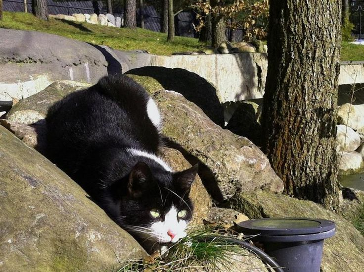 Patchwork the Cat on the rocks in the hotel & SPA Termy Medical WARMIA PARK (Pluski near Olsztyn, Warmia and Mazuria)