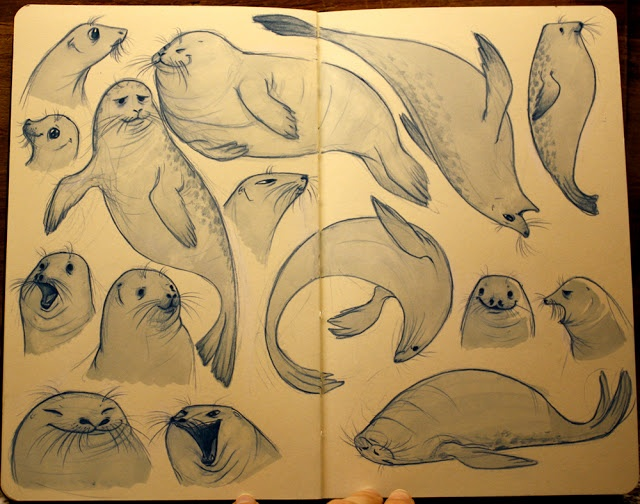 Seal Sketches by Meg Park