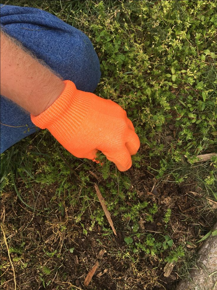 When I received the chance to try out a  free pair of Glomax gloves, I was excited because married to a farmer, I see his and my son's torn and tattered work gloves all the time. The farm gloves we…