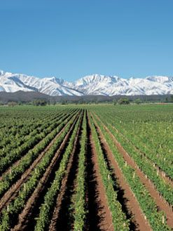 Mendoza, Argentina--Going here in April, 2013