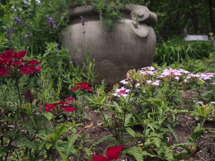 From the fragrant herb garden // Minnesota Landscape Arboretum