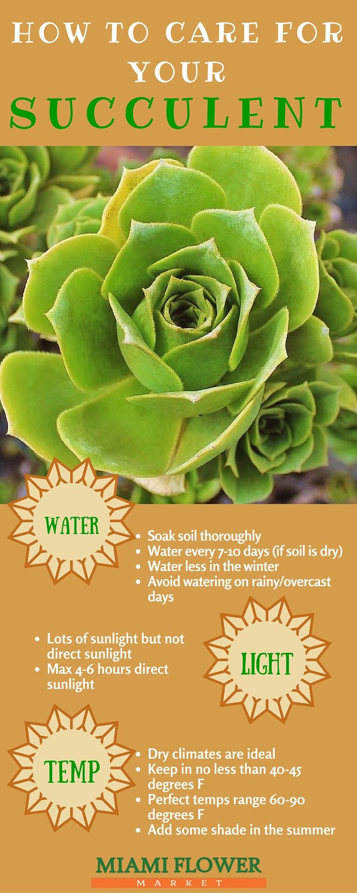 How to care for your succulents at home!