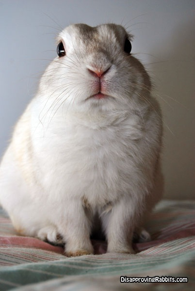 Disapproving Rabbits: Buster