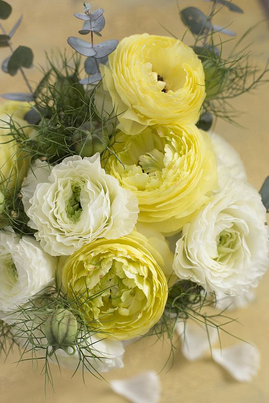 RANUNCULUS - WHITE & YELLOW