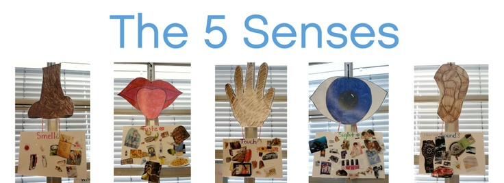 The5senses