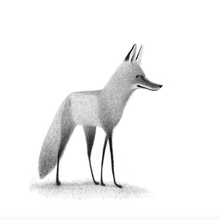 "1,236 Likes, 14 Comments - Catbird Agency (@catbirdagencypix) on Instagram: ""Fox, by Heidi Smith"""