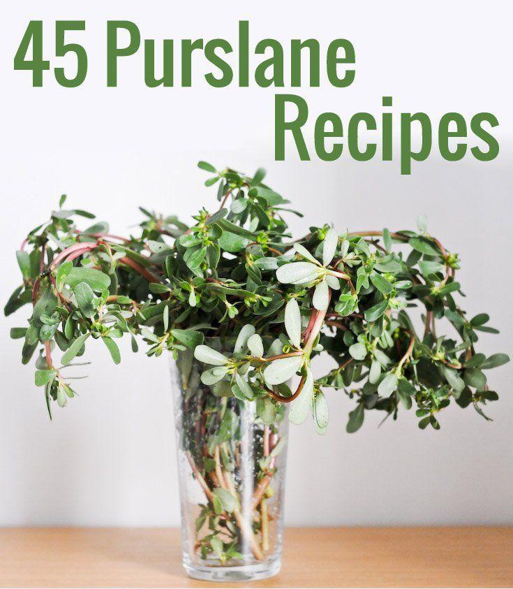 Recettes de pourpier : 45 Idées pour utiliser le pourpier   Chocolate & Zucchini