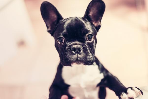 Cómo quitar el olor a pis de perro - 7 pasos - unComo
