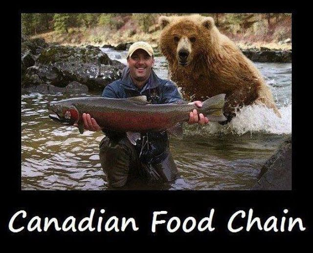 Meanwhile in Canada | FubarFarm.com truth be told, I'm pretty sure the bear would prefer the fish, lol