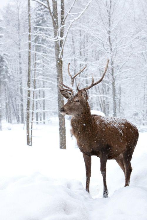 Multi-Wear Wrap - snow sleigh deer green by VIDA VIDA nFD96lUTd