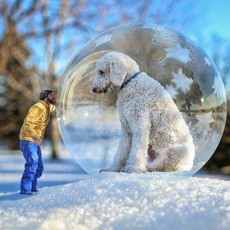 Fotógrafo cria incríveis imagens com seu cachorro em tamanho gigante