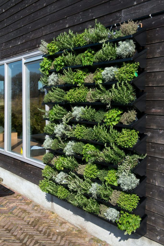Grun Will Hoch Hinaus Designigel Vertikaler Garten Bepflanzung Wandgarten