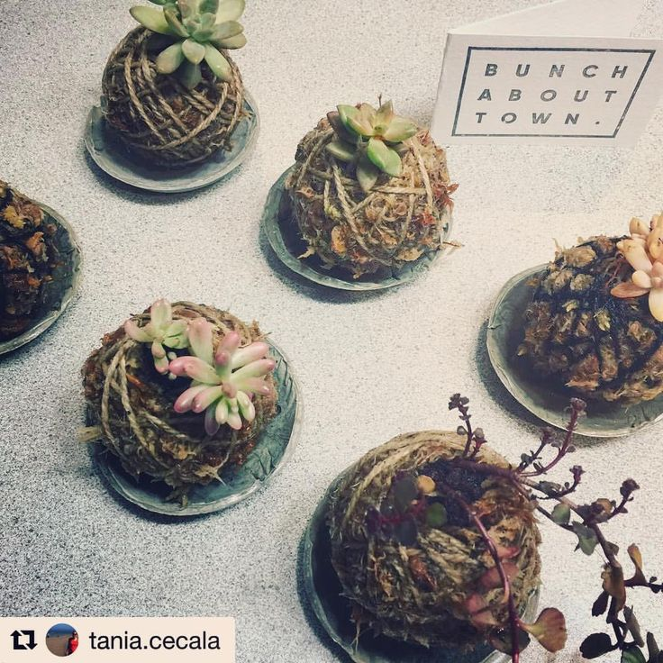 """20 Likes, 4 Comments - Bunch About Town (@bunchabouttown) on Instagram: """"#repost @tania.cecala - """"@bunchabouttown thank you for my new babies. A beautiful creation from my…"""""""