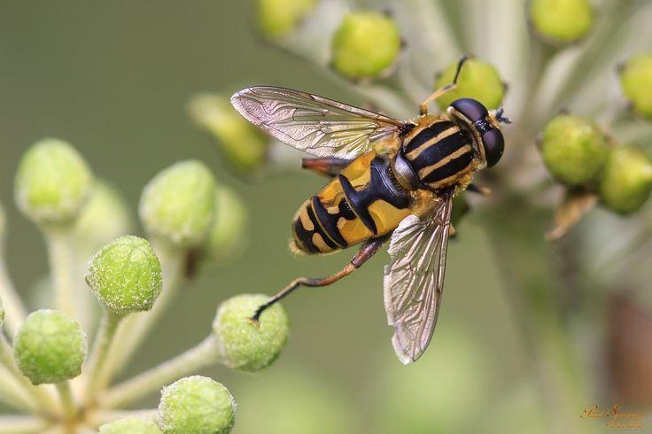 Qué aplicar en picaduras de zancudos y abejas #Salud
