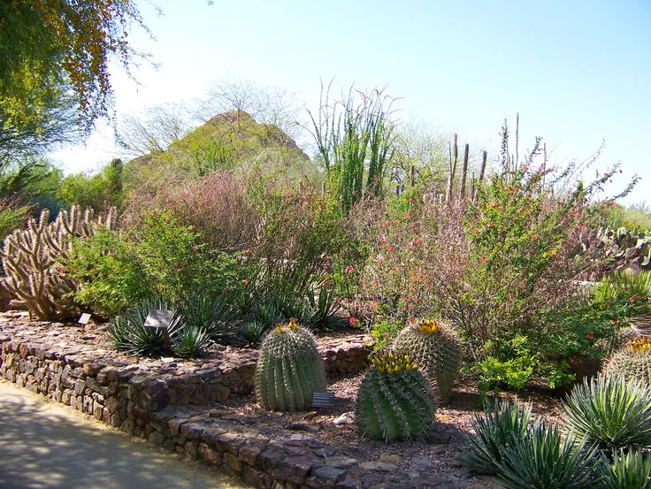 desert botanical gardens | Desert Botanical Garden AZ 7 - iWitness Weather Photos and Video Photo