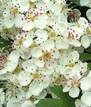 5 vaste planten met heerlijke eetbare bloemen. http://www.cruydthof.nl/blog/5-vaste-planten-met-heerlijke-eetbare-bloemen/