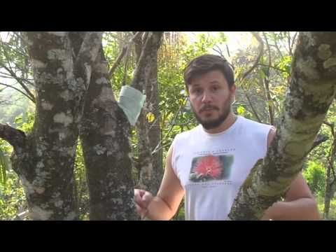 Como plantar orquídeas em árvores! - YouTube