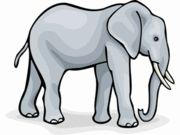 Facts about Elephant for kids - Interesting Information about Elephant