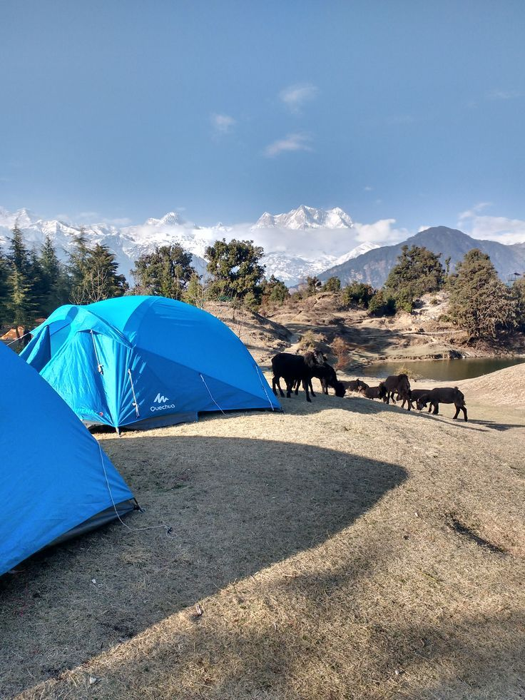 Campsite at Deoriatal - Check out those cute sheep. Amazing view from my alpine tent during our trek and overnight camp in Uttrakhand, India.