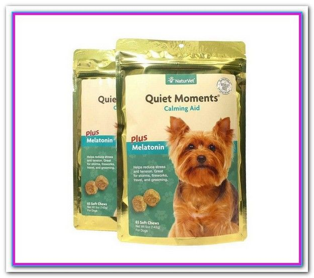 Best Dog Food For Yorkies South Africa With Images Best Dog