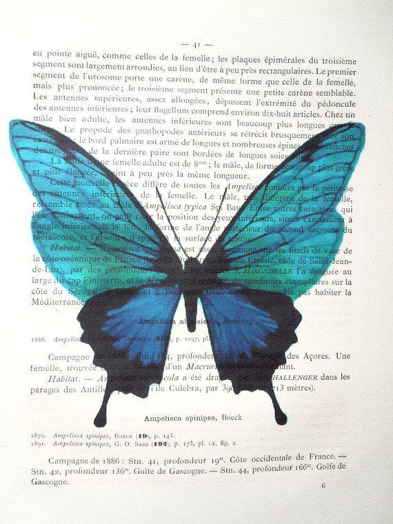 Ocean Blue Butterfly Watercolor Print on 1900 Prince Alvert I De Monaco Campagnes Scientifiques 1st Edition