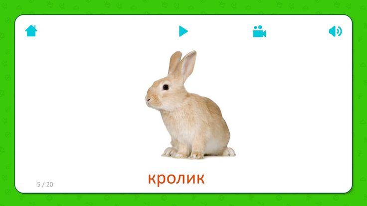 Карточки для детей - Кролик (Rabbit) - Домашние животные Бесплатная установка приложения для iOS и Android: http://onelink.to/flashcardsforkid