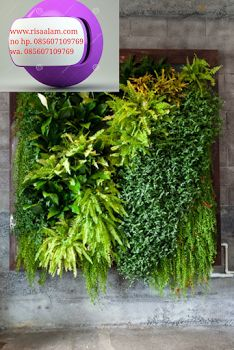 jasa pembuatan vertkal garden kebon jeruk, kami bergerak di bidang landsekap meliputi tukang taman, jasa pembuatan vertikal garden dengan ha...