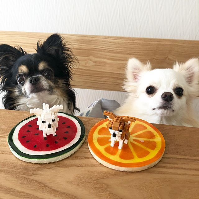 Daisylove0604 Sur Instagram チワワのナノブロック チワワ感出ていて可愛い ナノブロック Nanoblock チワワ ロングコートチワワ チワワ多頭飼い ふわもこ 犬との暮らし Chihuahua Longcoatc チワワ 犬 子犬 かわいい