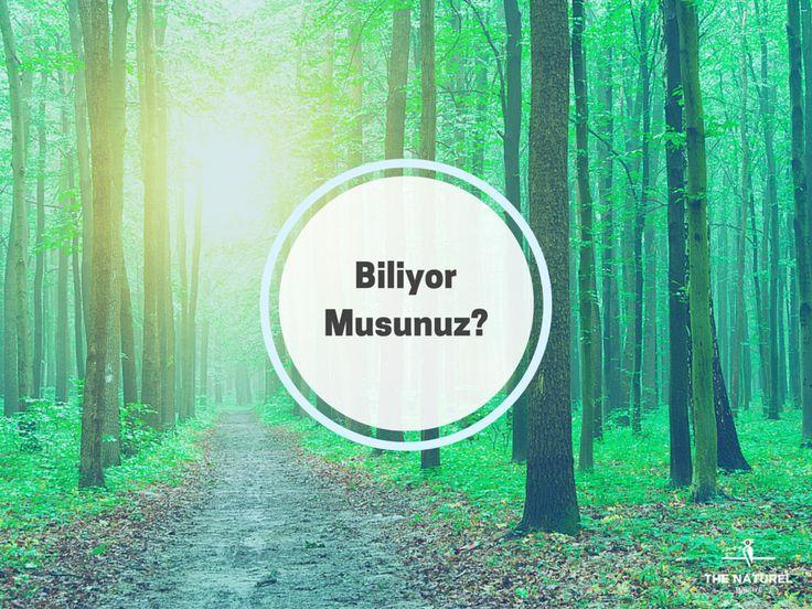 Dünyada ahşabı inşaat sektöründe kullanan ülkelerde ormanların küçülmediğini, tersine; bilimsel bir yaklaşım ve bilinçli bir koruma anlayışı ile hızla büyümekte olduğunu biliyor musunuz? #biliyormusunuz