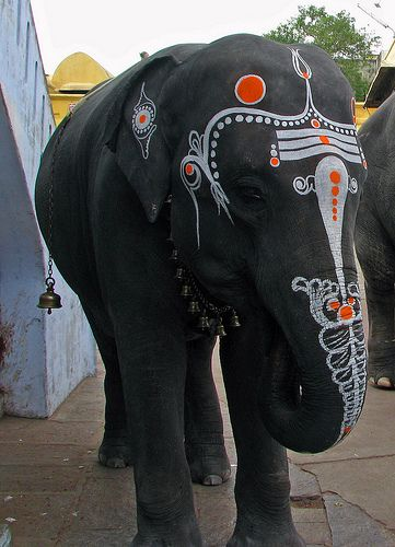 India, elephant in Kanchipuram Kamatchi Amman Temple