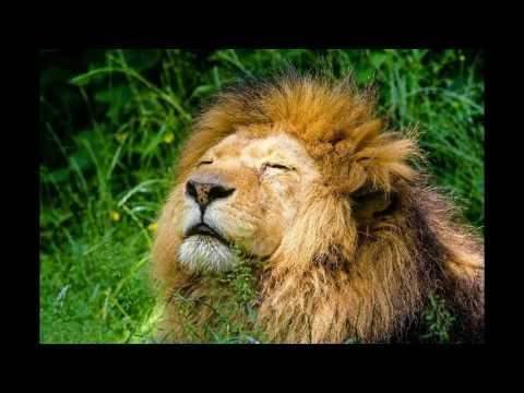 Charles leconte de Lisle: Az oroszlán halála