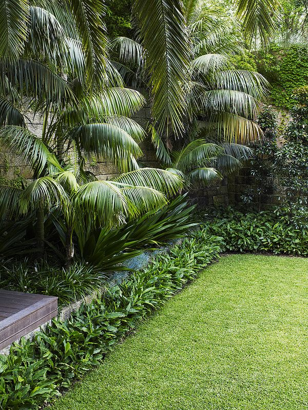 Lawn with modern tropical planting style | by William Dangar & Associates