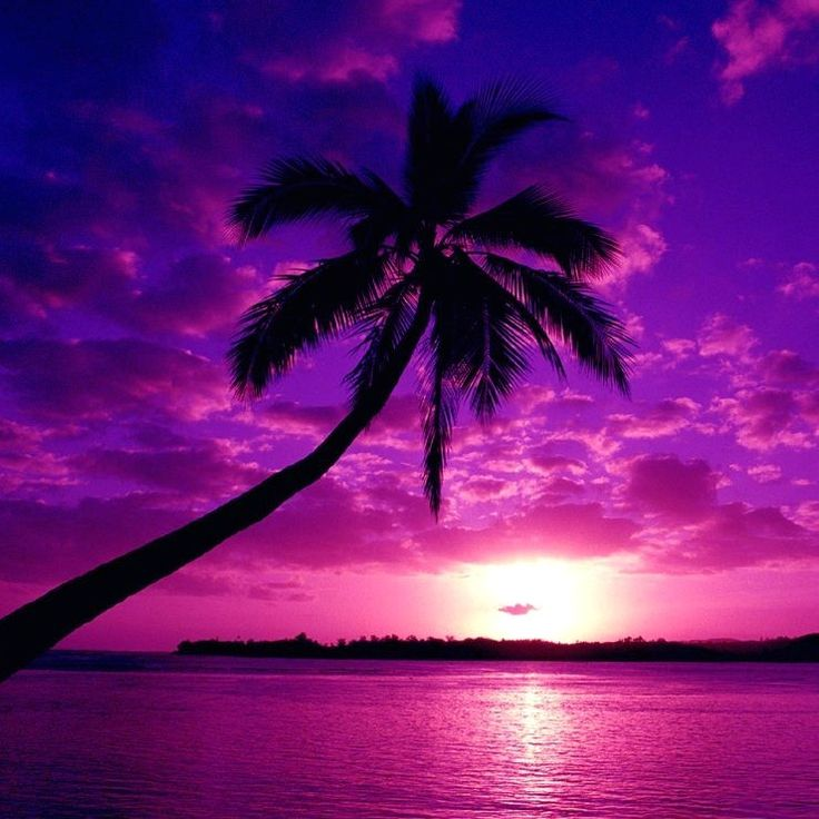 99 best purple images on pinterest all things purple purple beautiful picture of a palm tree purple and pink sunset junglespirit Choice Image
