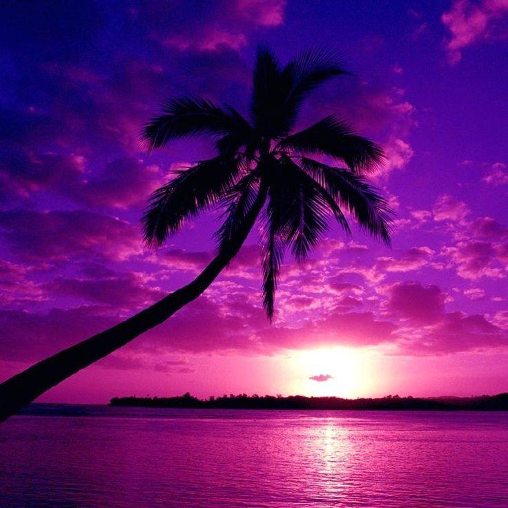 : Purplesky, Purple Sunsets, Colors, Palms Trees, Beautiful, Beaches Sunsets, Purple Sky, Beaches Photos, Tropical Places