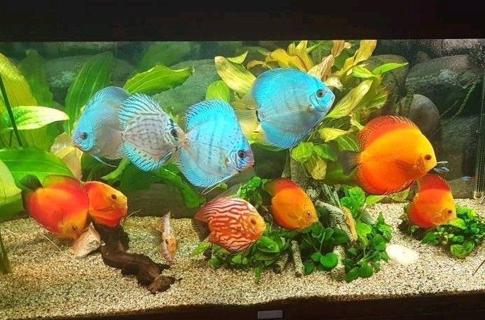 verkaufen unser juwel aquarium mit 240l fassungsvermoegen ca