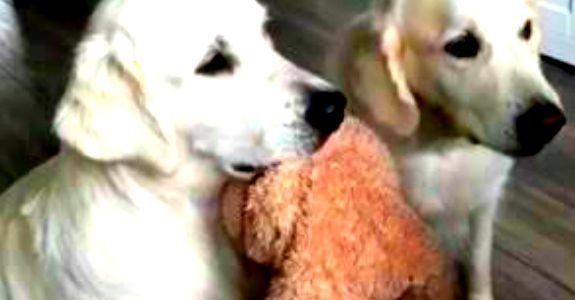 Verzorgster geeft hond snoepje: Wat het andere hondje dan met het speeltje doet is onbetaalbaar